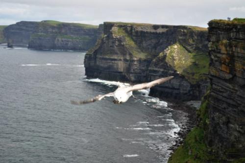 Cliffss of Moher (3)