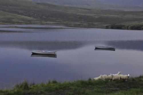 Szkocja (9)